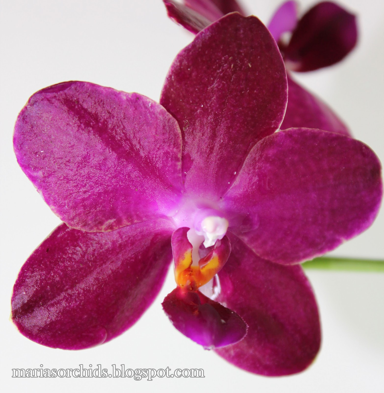 Different Color Orchids