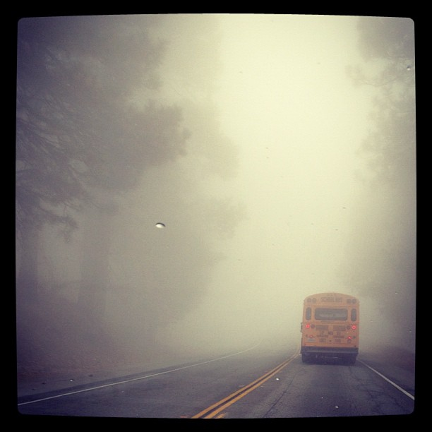thick fog, road, bus