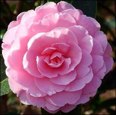Самые дорогие цветы в мире. Топ-9 TopMira  - самые красивые цветы картинки