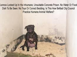Lennox in his kennel