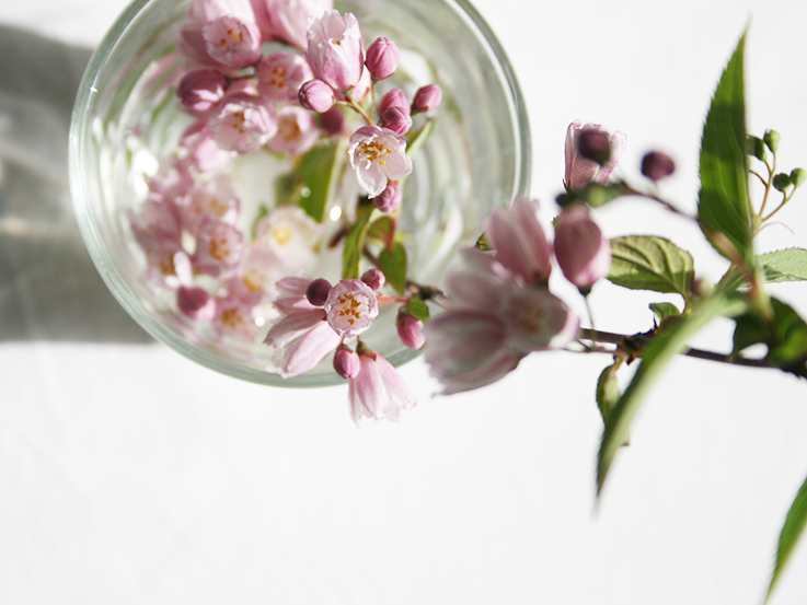 tiny pink flowers in a jar