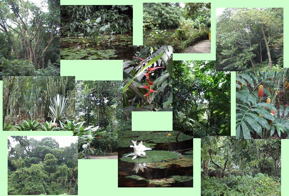 Guanacos verdes jardin bot nico un oasis en la ciudad for Lagunas de jardin