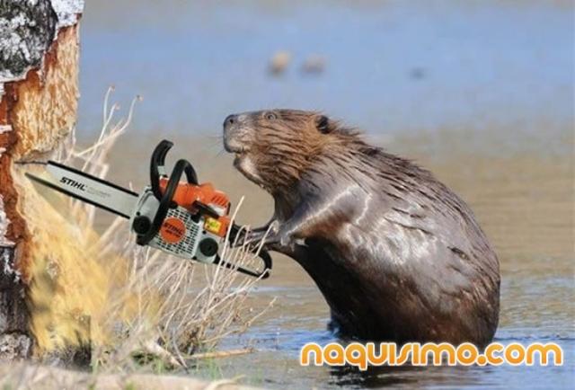 imagenes chistosas de animales con armas - Fotos de animales chistosos con armas Descargar