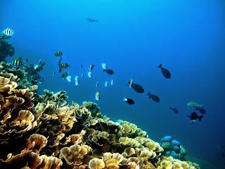 Keindahan Tanjung Nuhanera Lembata