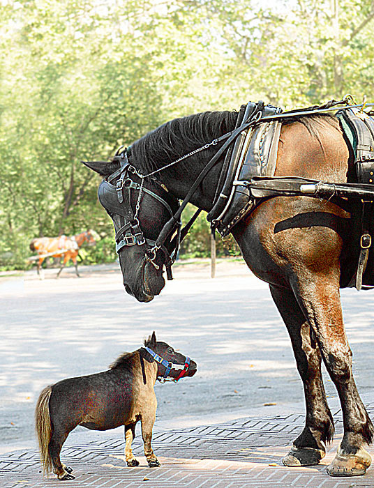 world�s smallest horse incredible dot com