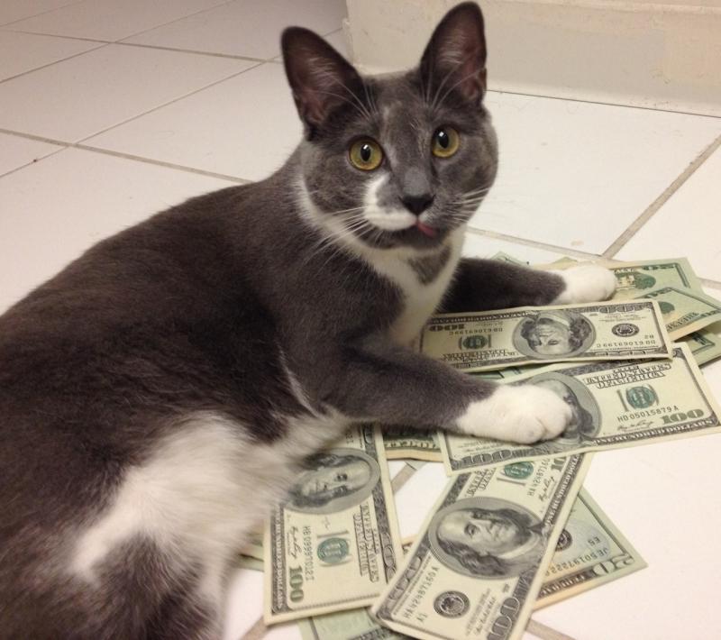 Money Cat Meme Reddit