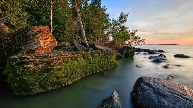 Floresta na praia, mar e natureza