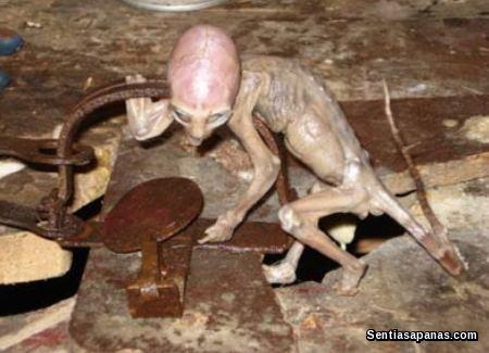 Mexico Baby Alien