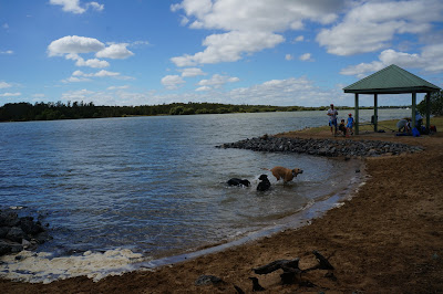 I Had A Really Good Time At Nudgee Beach And Im So Happy I Finally Got To Play With Some Brisbane Dogs
