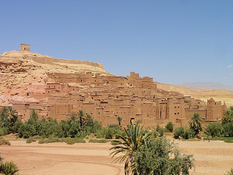 sahara desert plant life