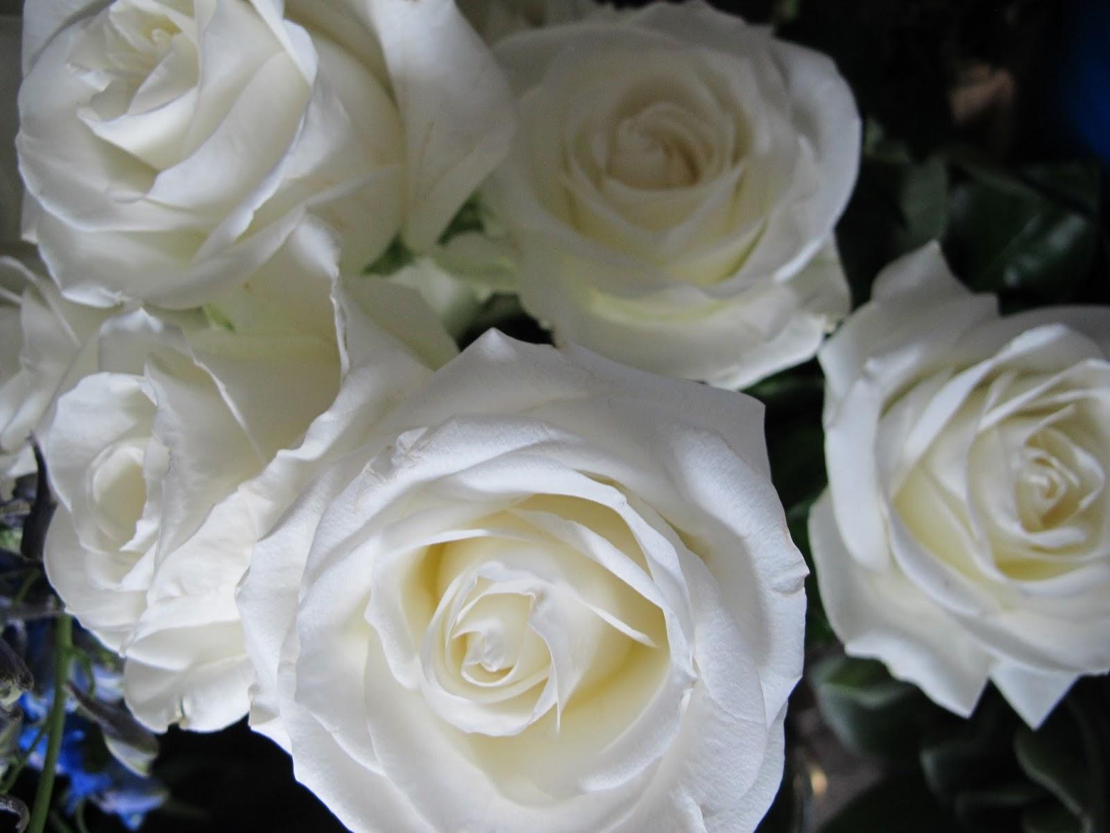 Bloomingblog 2015
