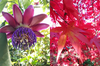 Miss Chaela Boo - October Hightlights - Cambridge University Botanic Garden