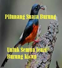 Lomba burung kicau