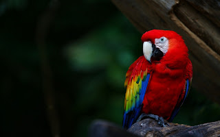 Mr Lonely Parrot HD Wallpaper