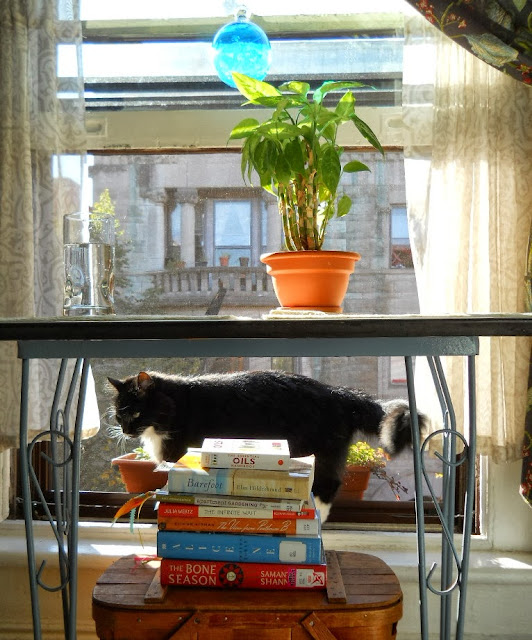 Sunshine and books
