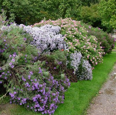 Arte y jardiner a plantar un seto campestre 4 etapas for Setos para jardin