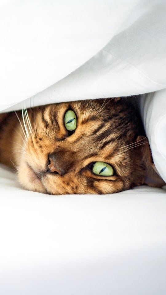 Green Eyes Cat In Bed Galaxy Note HD Wallpaper