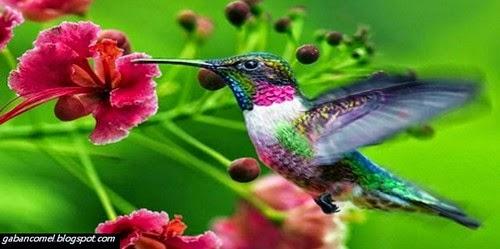 Menakjubkan Burung Ini Mampu Terbang Secara Berundur