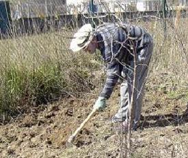 El huerto de balsas enero preparaci n de la tierra - Preparacion de la tierra para sembrar ...