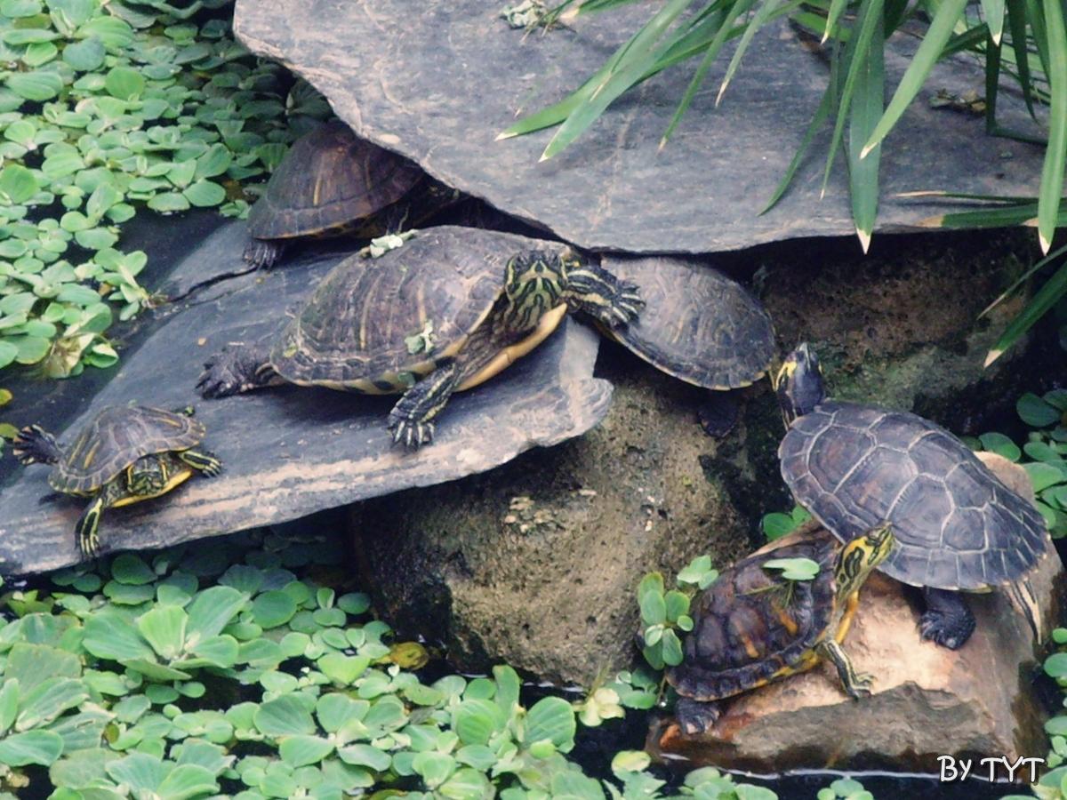 De todo un poco tortugas en atocha for Filtro para estanque de tortugas