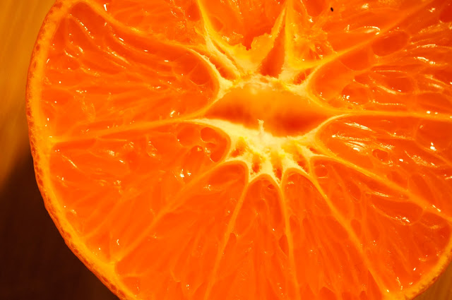 macro photography orange