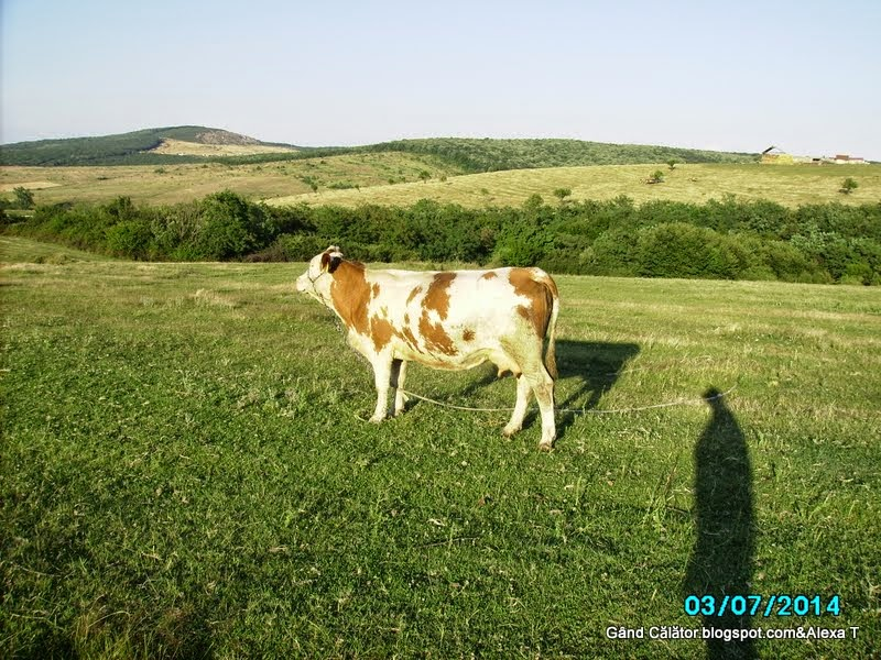At Cordău; near by Băile Felix, Băile 1 Mai at Sînmartin in Bihor County;