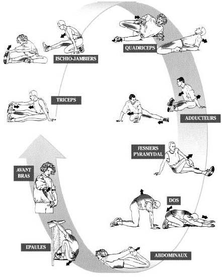 renforcement musculaire dos
