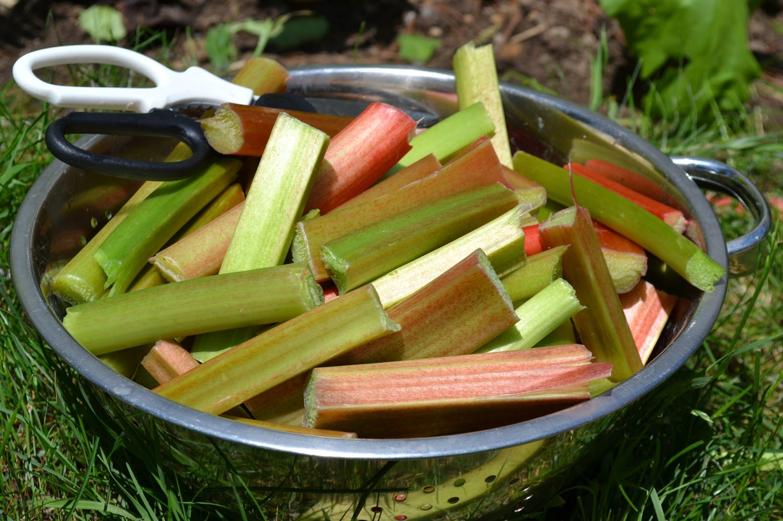 chopped up rhubarb stalks