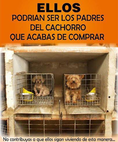 No compres perros de raza, adoptá!!