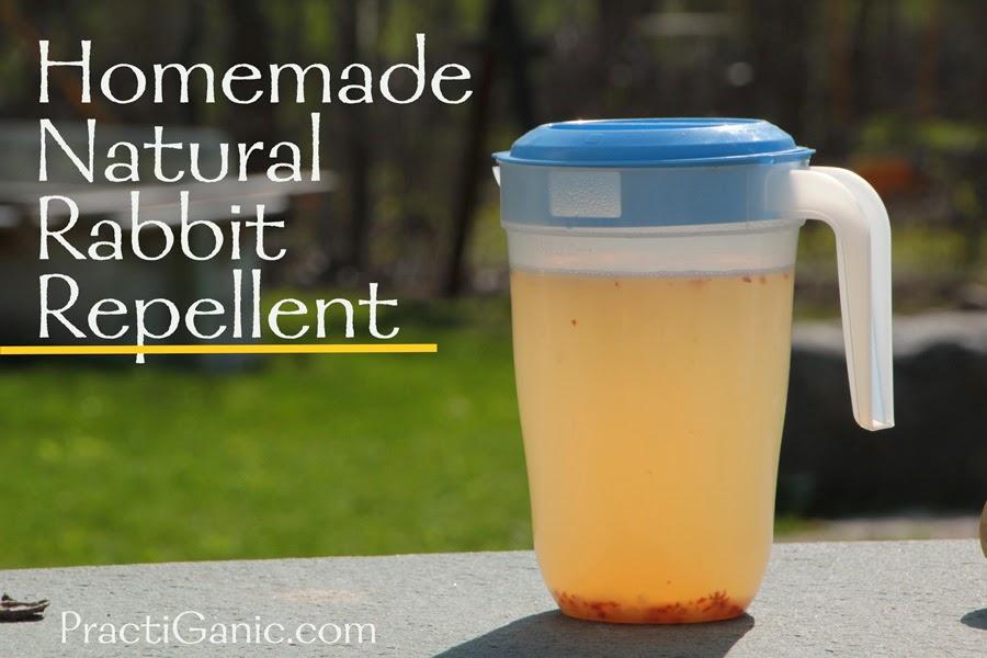 Natural Rabbit Repellent