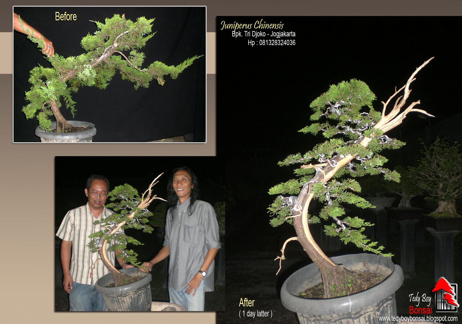 Bonsai Tedy Boy Bonsai INDONESIA Bonsai Europe Bonsai Usa