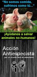 Acción Antiespecista