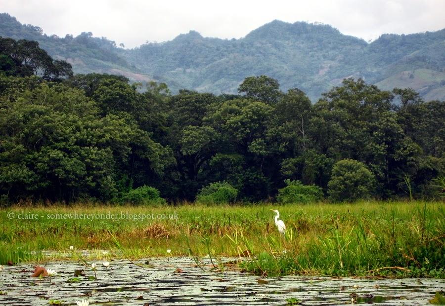 White Heron - Lake Yojoa, Honduras