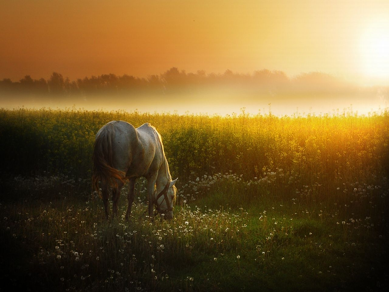 Amazing   Wallpaper Horse Landscape - hd+wallpapers+(1)  2018_783975.jpg