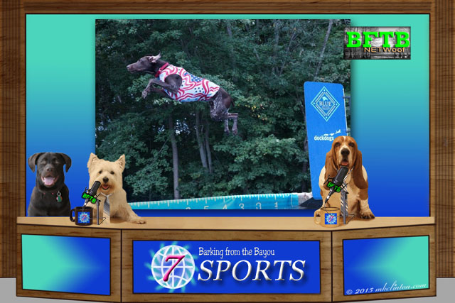 BFTB NETWoof sports desk with backdrop of GSP Dock Diving