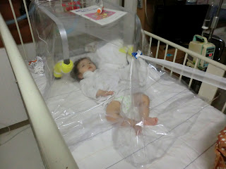 Amane was put in an oxygen tent for 2 days. Seeing her like this absolutely broke my heart but we were very fortunate to have taken her in when we did; ... & Eyes of Hiro: January 2012
