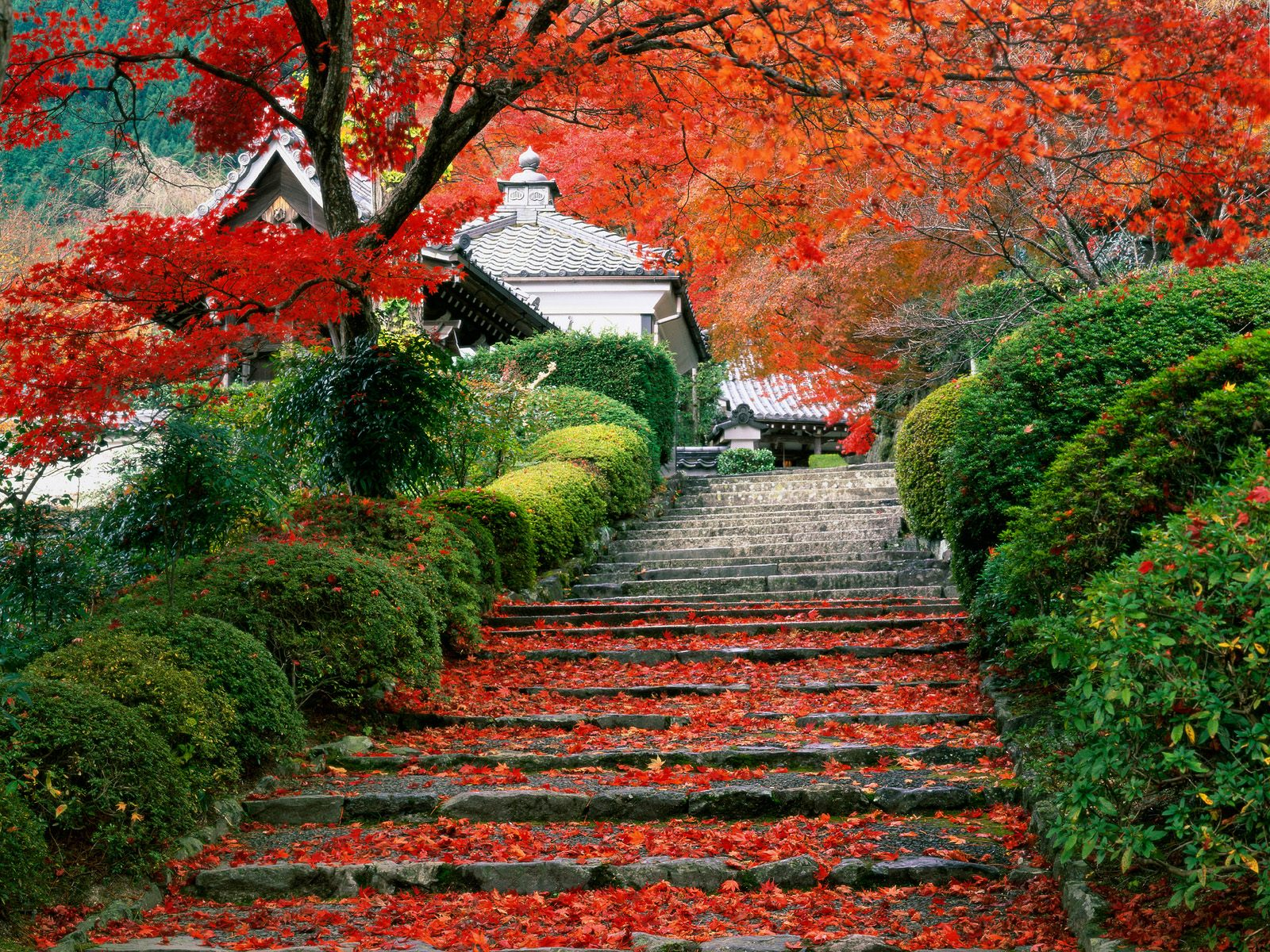 http://1.bp.blogspot.com/-k6ypL57pneQ/TgB-QBrtBuI/AAAAAAAAf98/28xkzCTkK44/s1600/garden-staircase-kyoto-japan.jpg