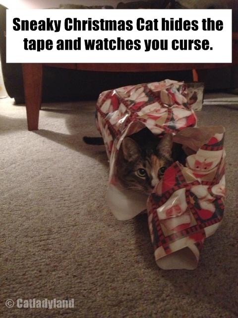 Cat Texts Funny