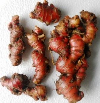 Jahe merah obat alami melangsingkan perut