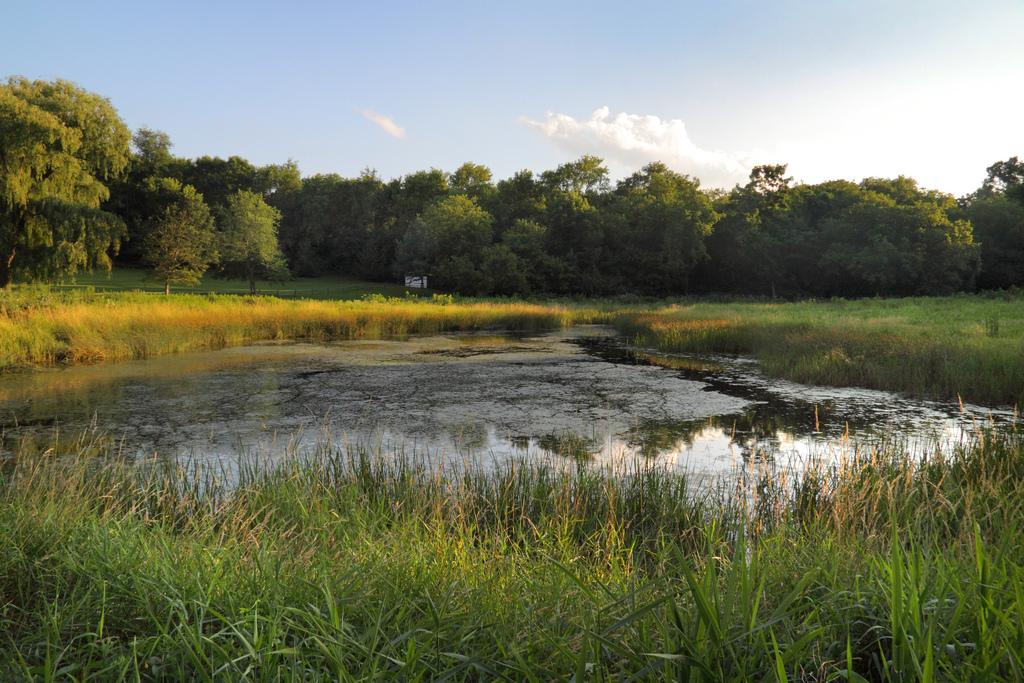 Save our stream sediment ponds for Building a 1 acre pond