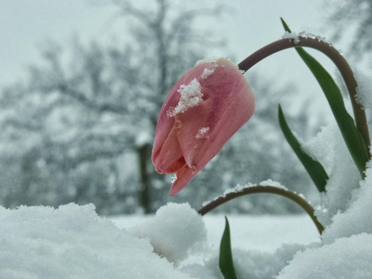 نتيجة بحث الصور عن الشتاء