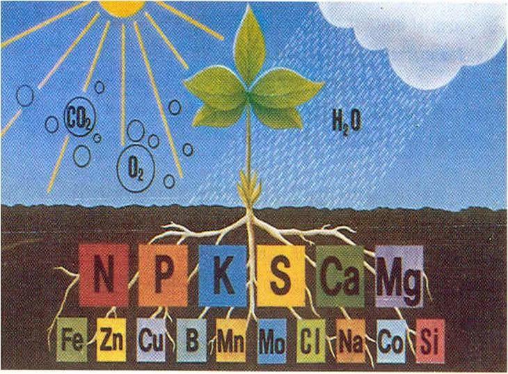 Mendiagnos Kekurangan Nutrien Pada Tumbuhan