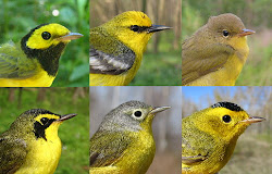 Birding by Ear - Warblers &#39;Cheep&#39; Sheet
