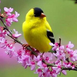 http://1.bp.blogspot.com/-k89wgwdWqjU/UFJF8upZaOI/AAAAAAAACSY/qXol1NPEfH8/s320/Passaro.jpg