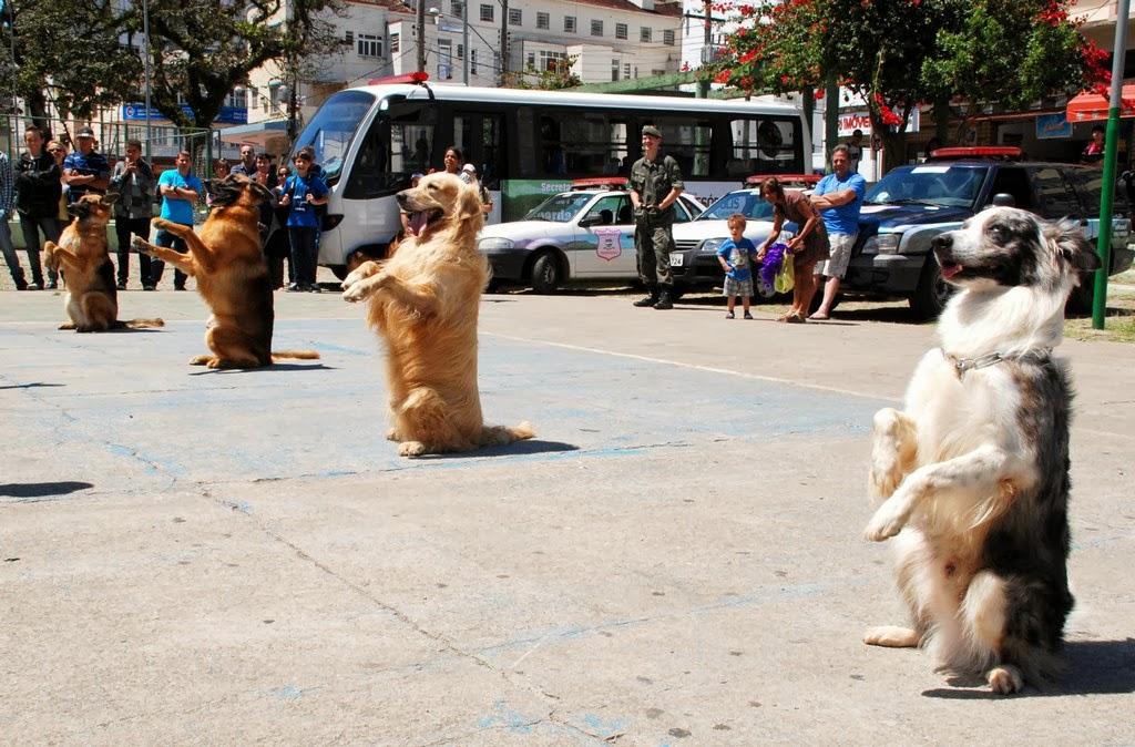 Show Dog: cães adestrados da Guarda Municipal do Rio de Janeiro encantam crianças e adultos
