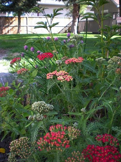 Jard n y terrazas fotos de jardines y plantas espectaculares for Jardines espectaculares