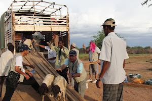 Kambing korban turun di Base Camp Dadaap