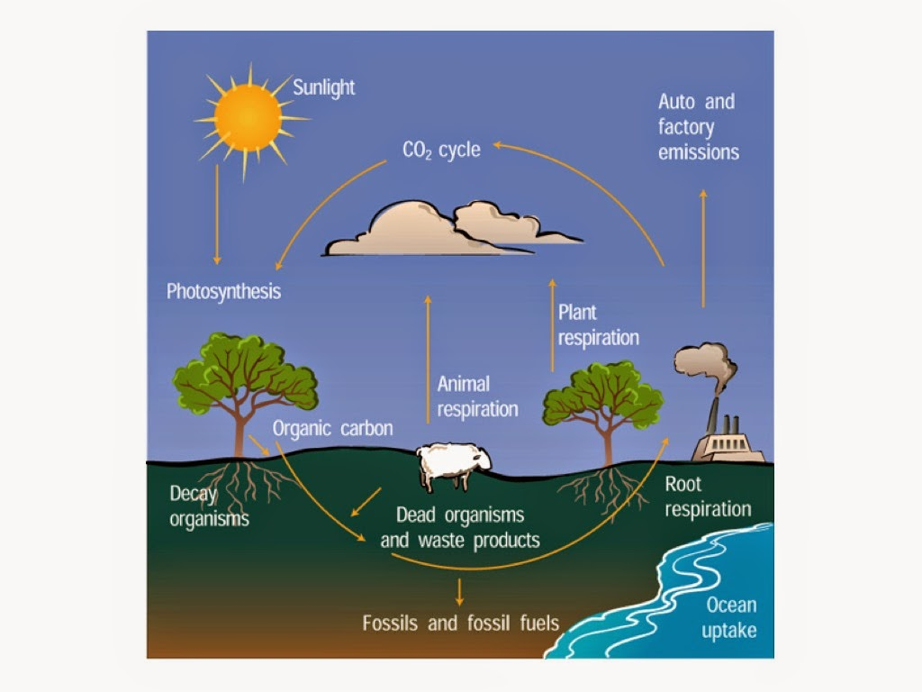 Woodstock earth blog for 0 4 soil carbon