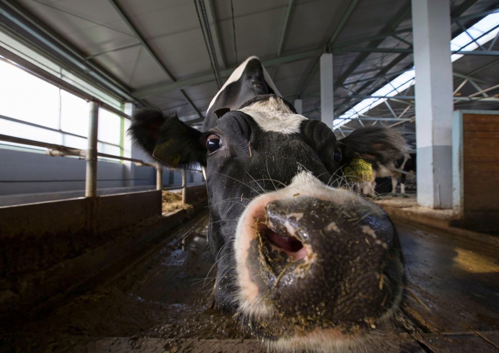 Animales Salvajes Informacion