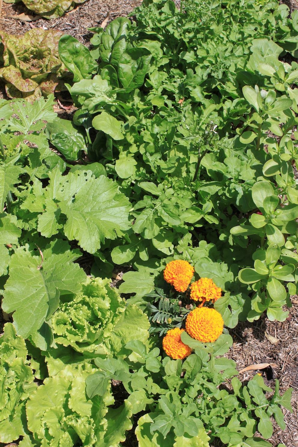 Sustainable Garden Design Native Gardens Permaculture